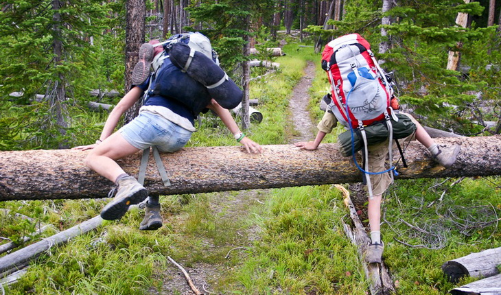 Kids climbing over fallen trees in Yellowstone National Park.