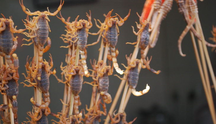 Many of us have a cognitive bias toward eating scorpions