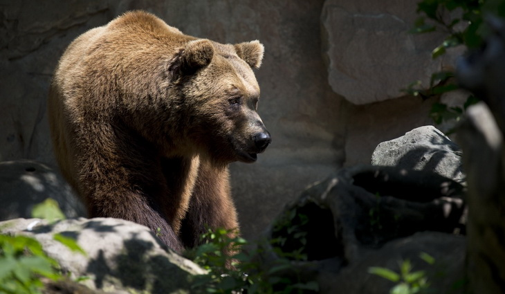 Brown Bear Near Green Plant