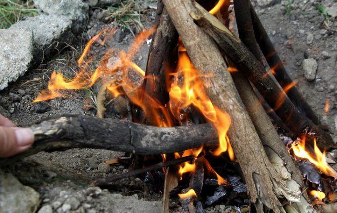 fuel wood