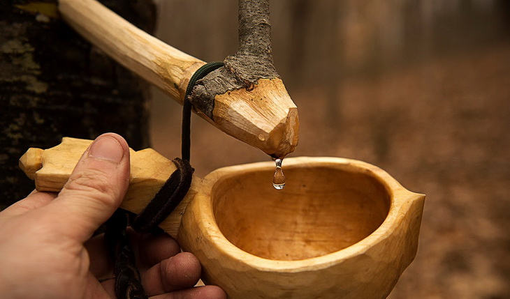The process for tapping birch trees is so wonderfully easy and low-key