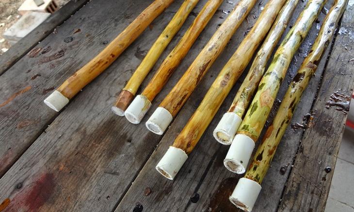 retama walking stick