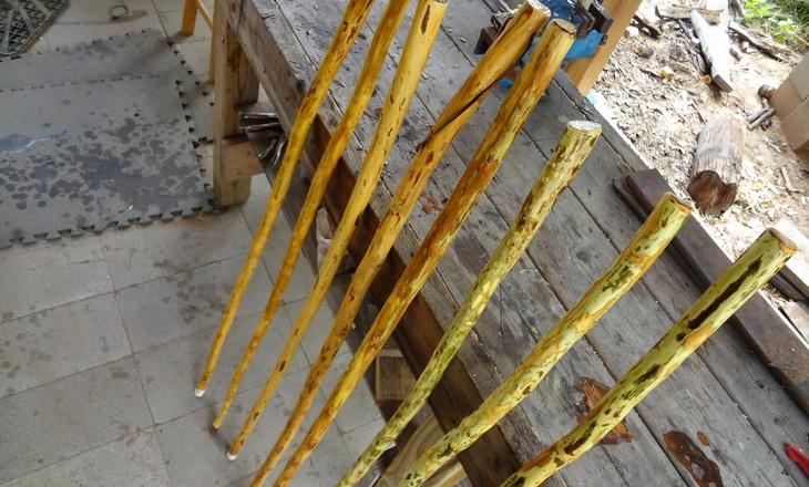 retama walking sticks
