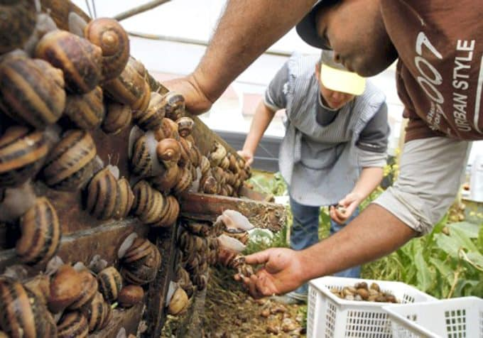 snails-farm