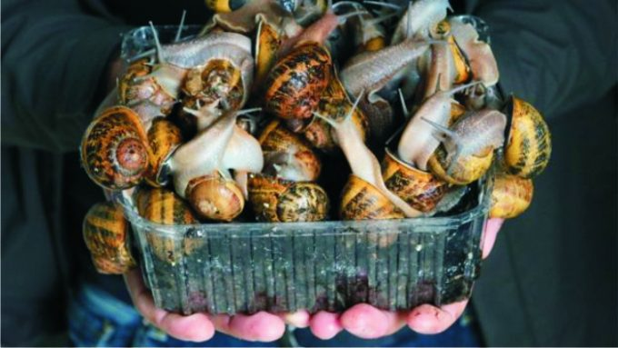 snails-in-a-container