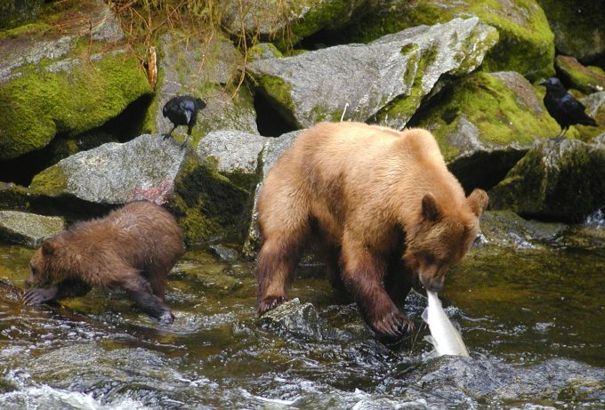 wildlife in tongass national park