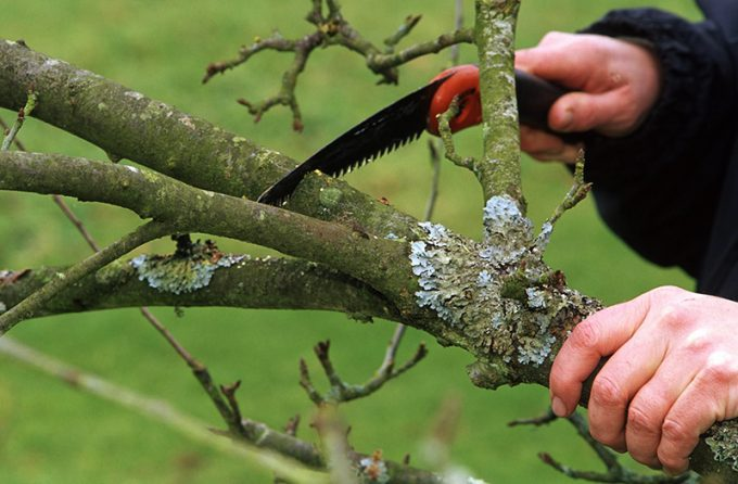 guy sawing a branch