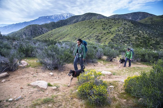 hikers on Sonoran Desert Trail