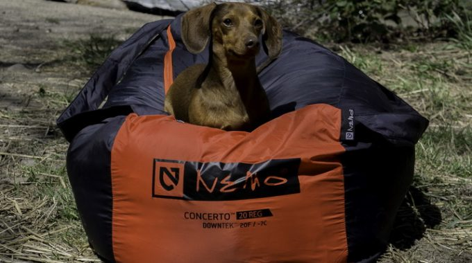 A little dog sitting on a NEMO Concerto Sleeping Bag