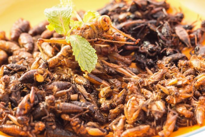 we might all be eating insects in the future