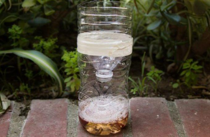 bottle fly trap